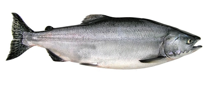 Pink (Humpy) Salmon