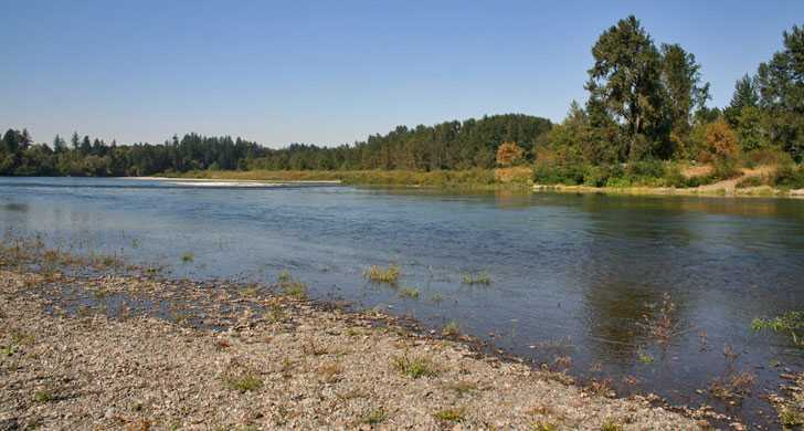 Willamette River Fishing Reports Fishing Access Maps